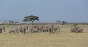 safari viaggio kenya