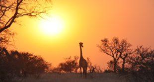 Vacanze in Zambia: tra le Victoria Falls e Lusaka